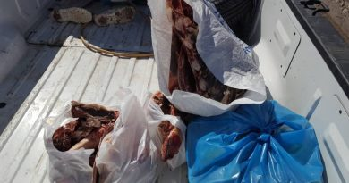 معدومسازی حدود ۱۰۰ کیلوگرم گوشت غیربهداشتی در ماکو
