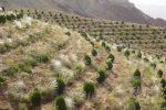 ۱۵۰ هکتار زمین ملی در چالدران رفع تصرف شد